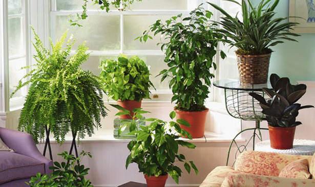Как выбрать увлажнитель для растений