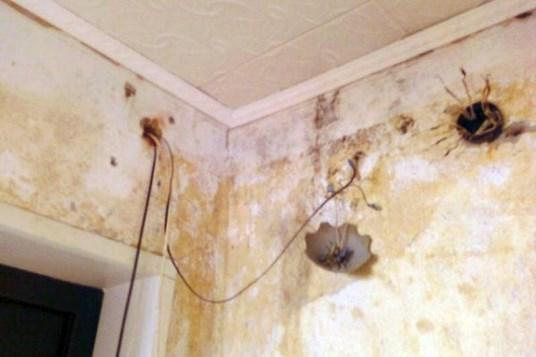 Появление плесени из-за обильного конденсата на стенах